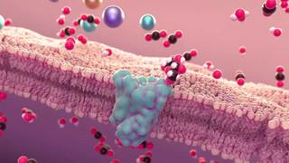 Passive diffusion through plasma membrane