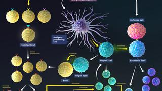 Adaptive Immunity Response