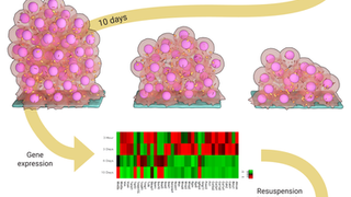 Somatic cells to Stem cells