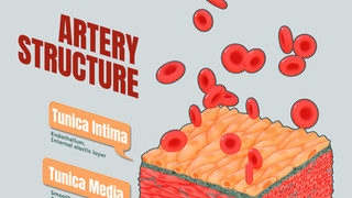 Artery wall structure
