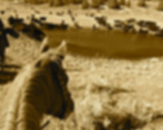 Cattle Drive, At the pond.jpg