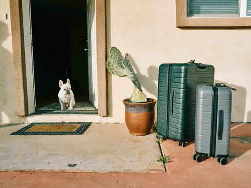 How To Travel with Fido