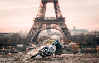 Paris France - Pigeons kising.jpg