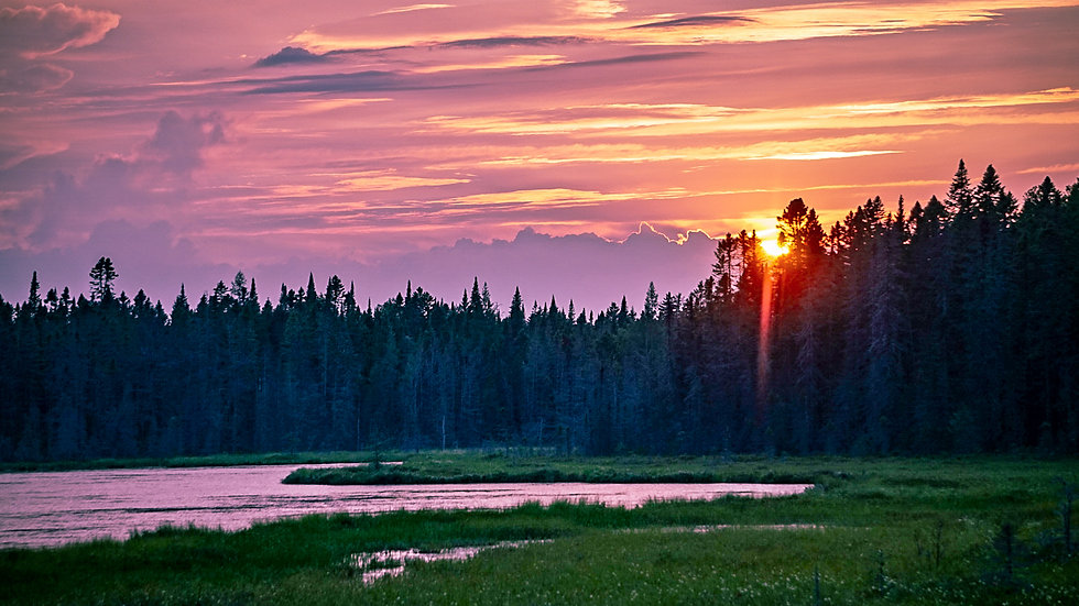 """Moose Bog 11""""x14"""" Matted Print Framed in a 13""""x15"""" setting"""