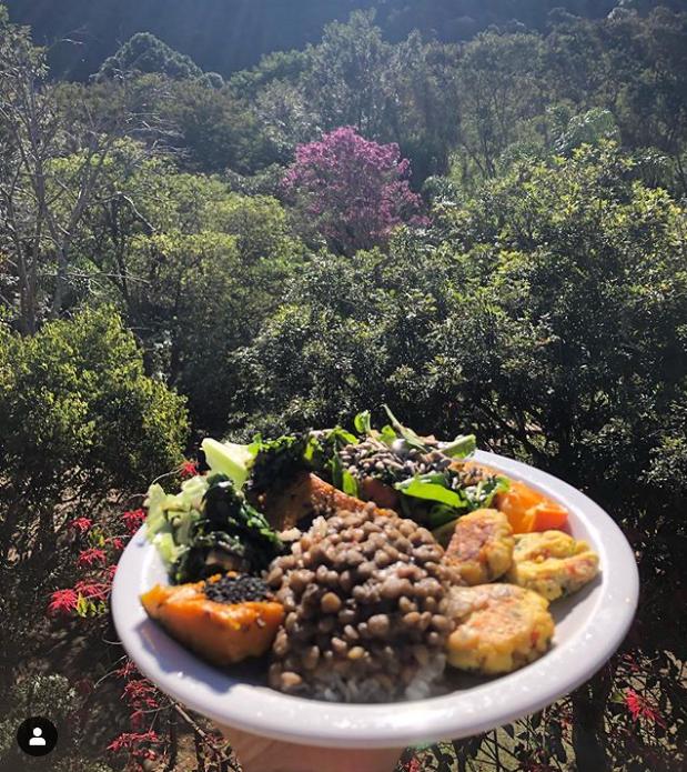 Almoço na floresta