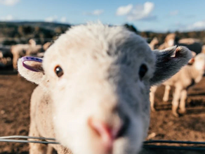 Do we Really Need to Wear Clothes Made From Animals?