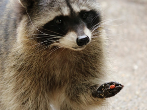 Leather, Fur & a Lot of History. The problem with Animal-Fashion.
