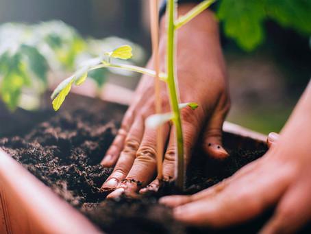 FIAUdeC invita a jóvenes a participar en concurso de ideas para la sustentabilidad ambiental