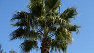 Palm tree in the gardens, El Molino del Conde