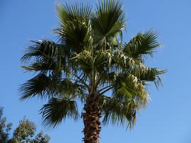El Molino del Conde: Palm tree in the gardens
