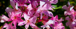El Molino del Conde: Geraniums in the garden