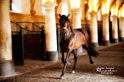 Royal stables cordoba.jpg
