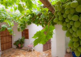 El Molino del Conde: Grapes in the courtyard