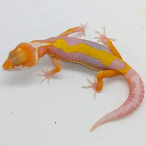 Sg high contrast extreme emerine tremper het eclipse ts male