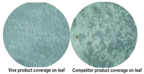 2020-06-22 photo1 coverage on leaf.JPG