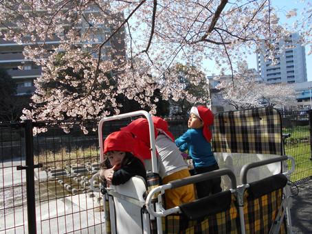 3月のみんなの様子(桜を見に行ってきました♪)