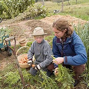 Farmer and child pulling carrots at Quill's End Farm