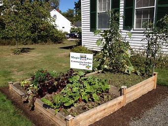 Community garden beds with vegetables growing