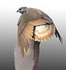 welded steel Hawk