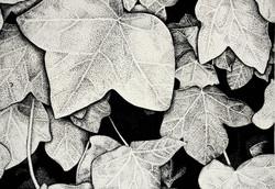 Ivy (2008)