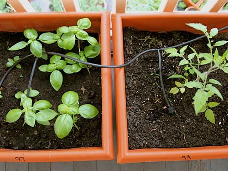 111 Kids Growing Food