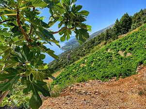 Wine empire of Pelješac - Private day-tour from Dubrovnik