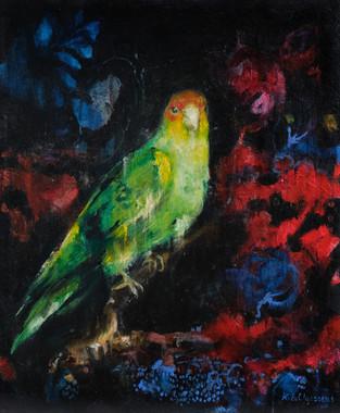 South Carolina Parakeet