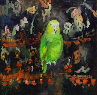 Twitter Rescue Bird