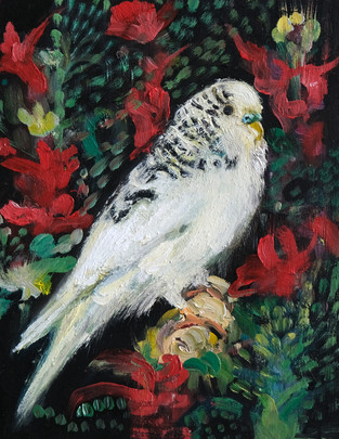 Decorated Budgie