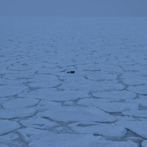 Wildlife in Antarctica