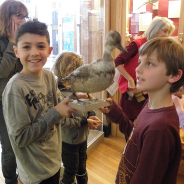 Remembrance of Lost Species Workshop at the Redpath Museum