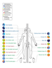 Your Body is an Ecosystem: Why Microbiomes Matter