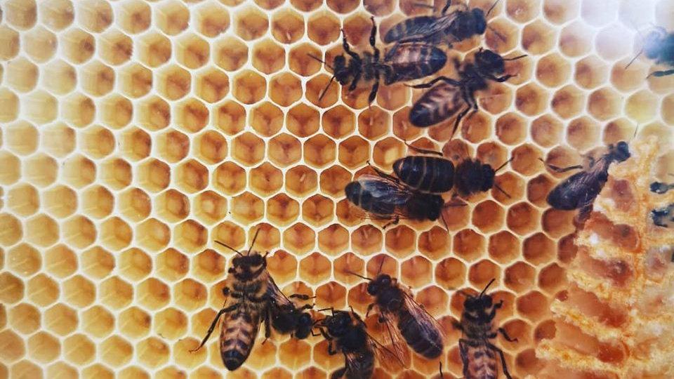 'Meet the Bees' Beekeeping Workshop