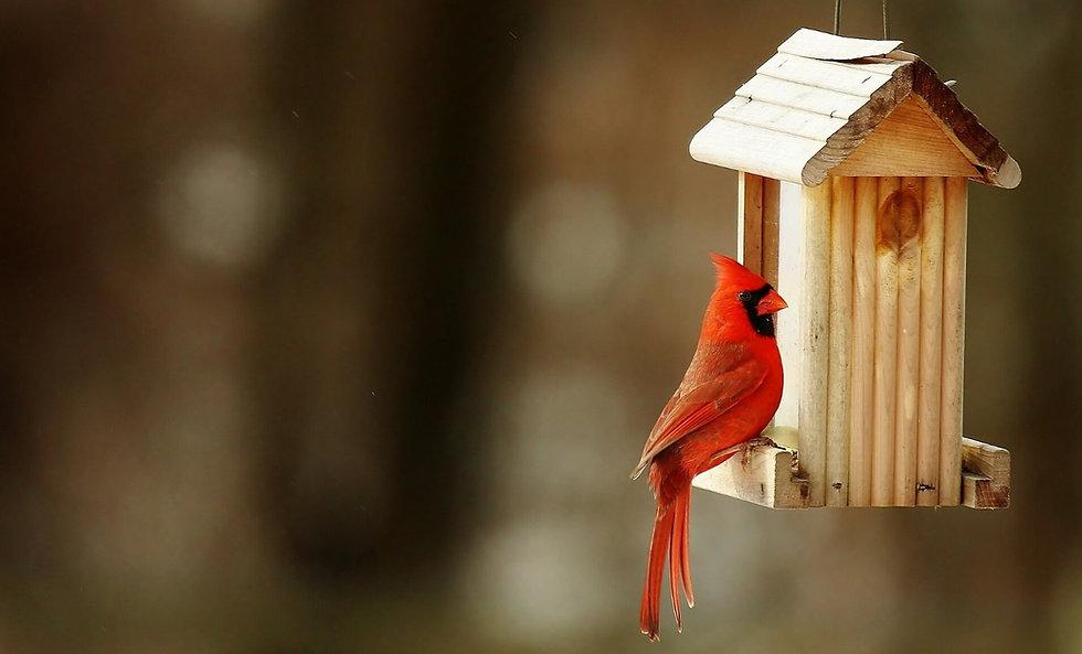 Prevent Birds Hitting Windows | CollidEscape