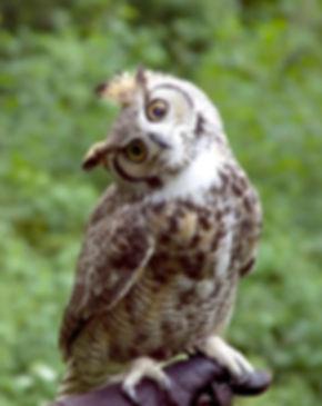 huh-owl-282005.jpg