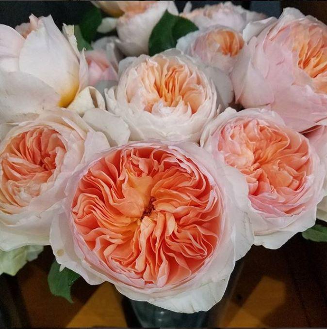 juliet roses macro insta