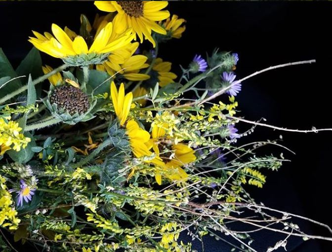 colorado wildflowers for robert
