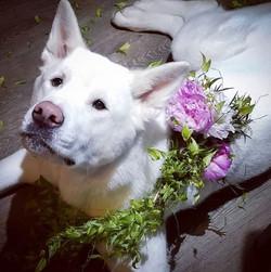 shiro flowers