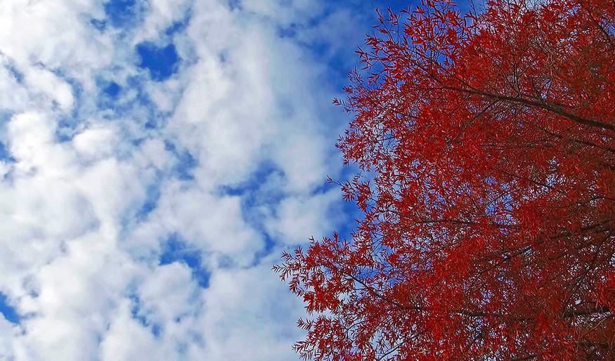 Fall Sky 8 x 12.jpg