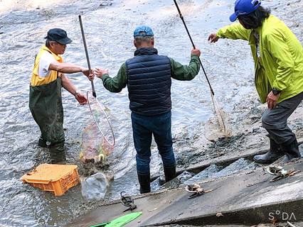 2020.11.1 11-Ⅰ例会  鯉の放流
