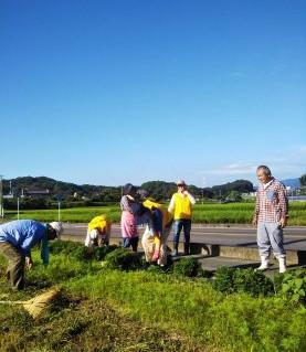 2019.9.8 9-Ⅰ例会 コスモス播種地の除草と草刈り