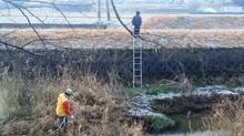 2月例会 花壇の草取りと宝珠川清掃