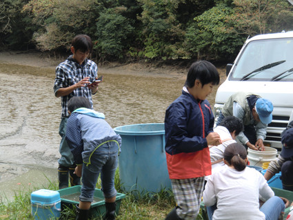 特別例会 錦鯉の捕獲&エビ獲り