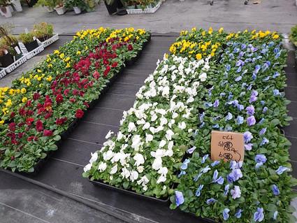 2020.11.8 11-Ⅲ例会 花壇植え替え