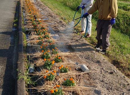 2020.6. 花の潅水作業日誌>>¥