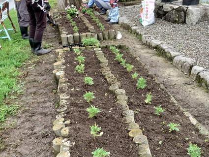 2020.6.24 6-Ⅱ例会 花壇の補植と補植苗のポット苗作り>>¥