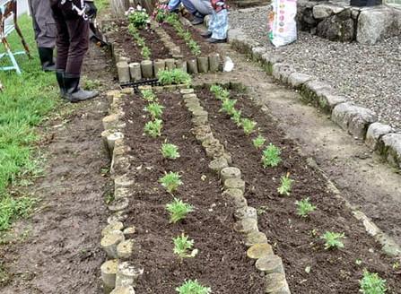 2020.6.24 花壇の補植と補植苗のポット苗作り>>¥