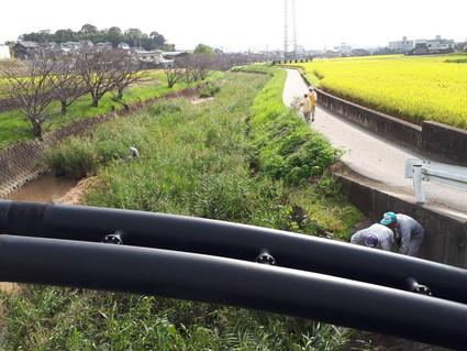 2019.10.6 10-Ⅰ例会  河川内自生木の撤去