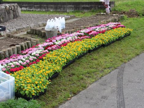 2021.5.22 花壇の植え替え