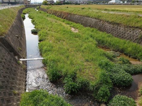 20214.27 子供達と水遊び 河川内草刈り